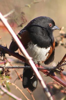 Sweet Little Songbird on a Vine Journal