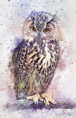 Bullet Journal Watercolor Owl