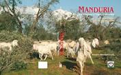 Manduria. Tra Taranto e Capo d'Otranto. Etimo, mito e storia del territorio