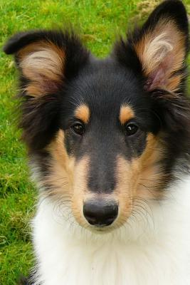 Such a Face! Handsome Collie Puppy Dog Journal