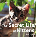 The Secret Life of Kittens