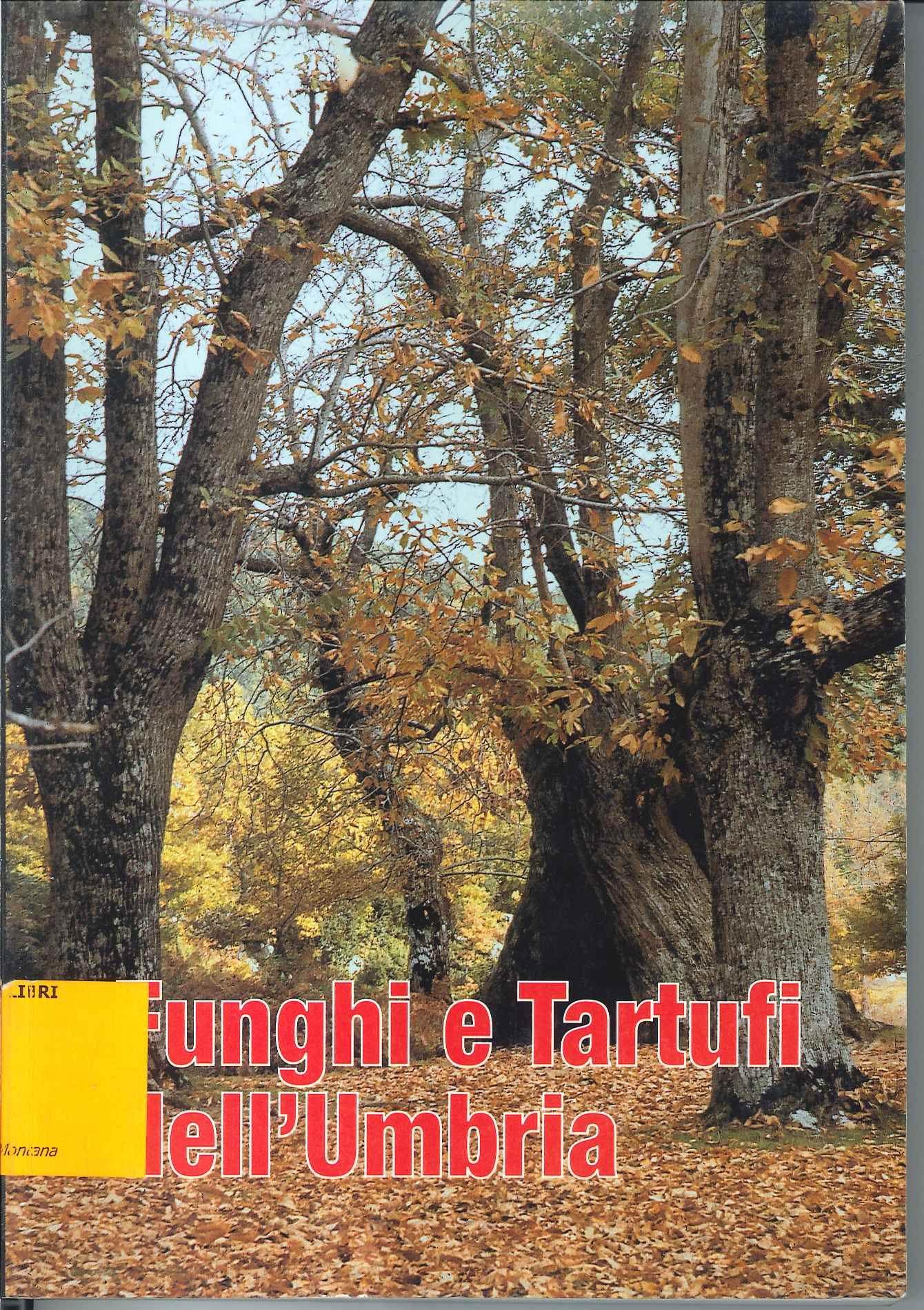 Funghi e tartufi in Umbria