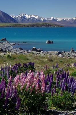 Lake Tekapo and Lupin Flowers New Zealand Landscape Lined Journal