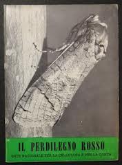 Il perdilegno rosso (Cossus cossus L.)