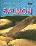 The Life of a Salmon