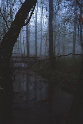 The Black Forest in ...