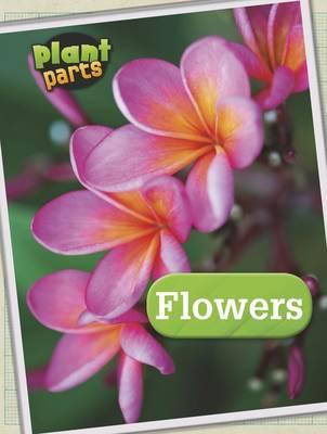 Plant Parts Pack A of 4
