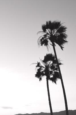 Journal - Black & White Palm Trees, Venice Beach, California