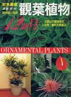 觀葉植物12個月