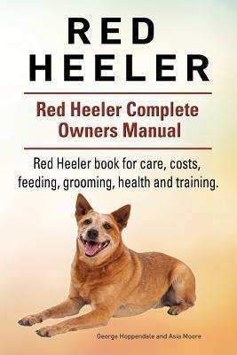 Red Heeler Dog. Red ...