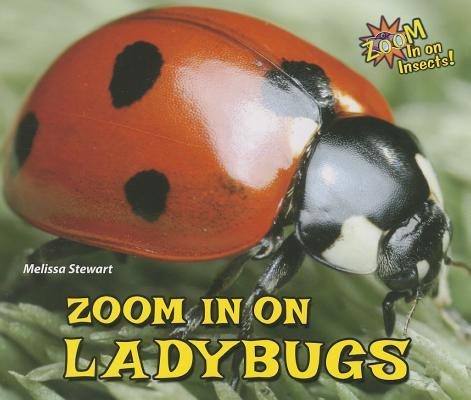 Zoom in on Ladybugs