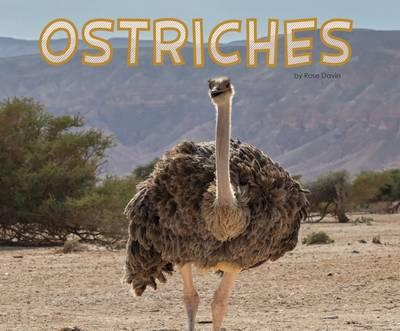 Ostriches (Pebble Plus