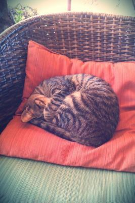 Sweet Napping Tabby Cat on a Cushion on a Chair Journal