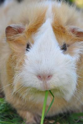 Cutest Guinea Pig Portrait Journal