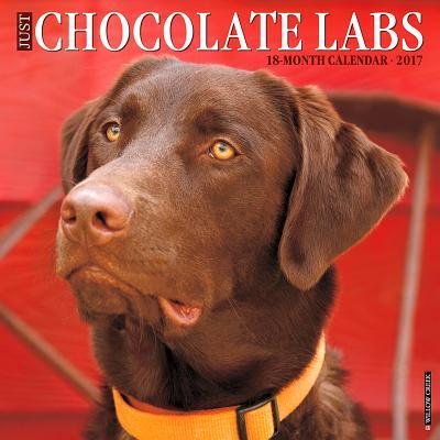 Just Chocolate Labs ...