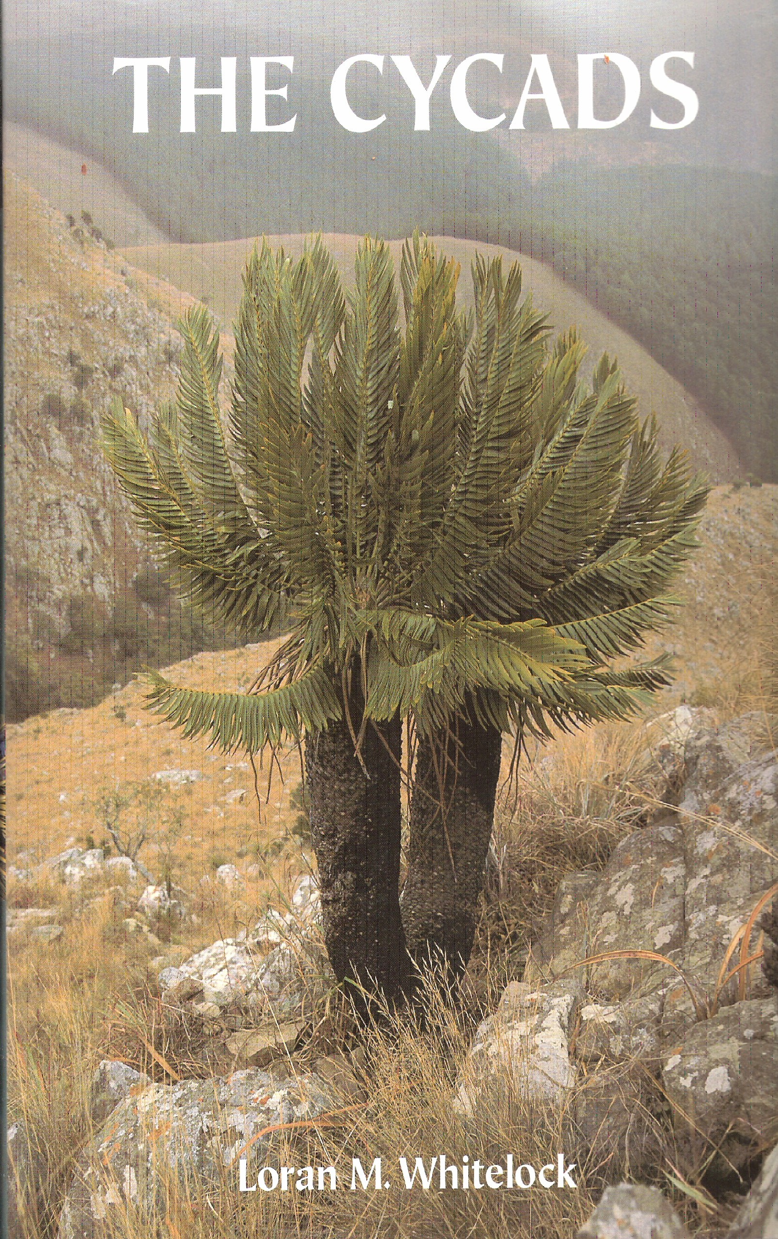 The Cycads