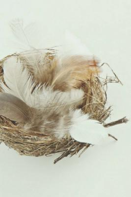 Feathers Appear When Angels Are Near
