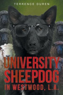University Sheepdog in Westwood, L.A