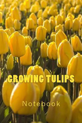 Growing Tulips
