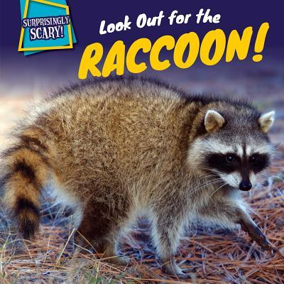 Look Out for the Raccoon!