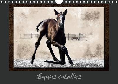 Equus Caballus Calendrier Mural 2019 Din A4 Horizontal