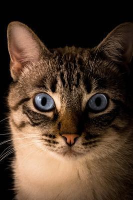 Blue Eyed Cat Journa...