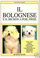 Il bolognese e il bichon à poil frisé