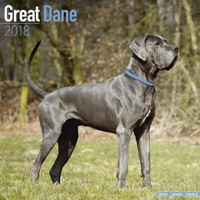 Great Dane (Euro)