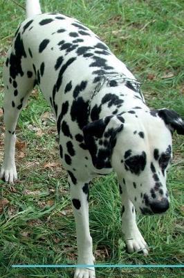 Dalmatian Affirmatio...