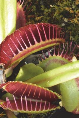Dionaea Muscipula Aka Venus Flytrap Plant Journal