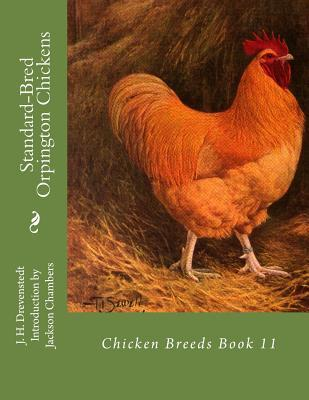 Standard-bred Orpington Chickens