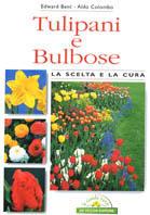 Tulipani e bulbose