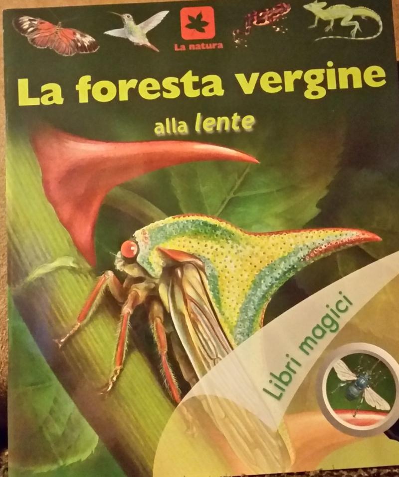 La foresta vergine alla lente
