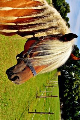 Haflinger Horse With...
