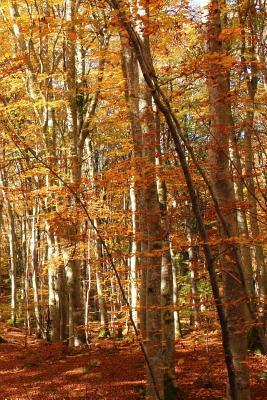 A View of Orange Leaves in the Woods in the Fall Journal