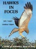 Hawks in focus