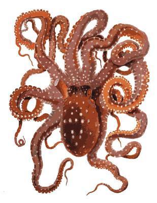 Octopus Bullet Journal