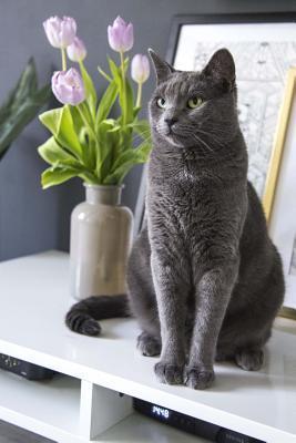 Elegant Gray Cat and...