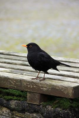 Blackbird Journal