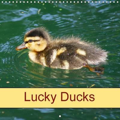 Lucky Ducks 2016
