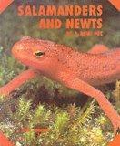 Salamanders and Newts As a New Pet