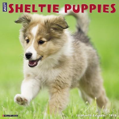 Sheltie Puppies 2018...