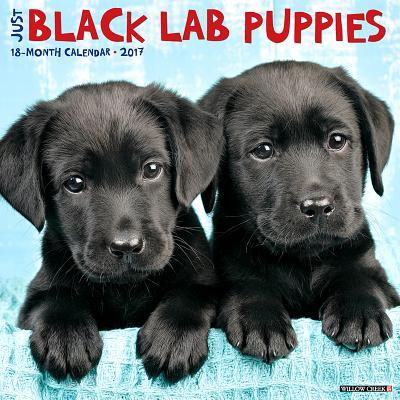 Just Black Lab Puppies 2017 Calendar