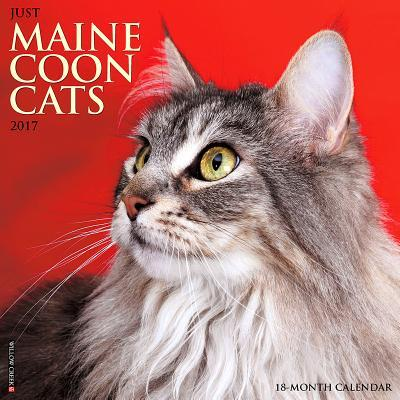 Just Maine Coon Cats 2017 Calendar