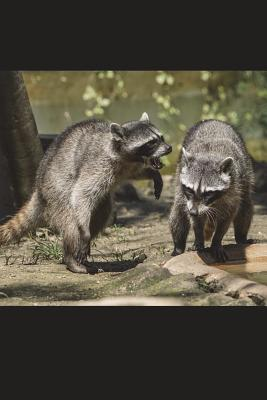 Raccoons at Play Jou...