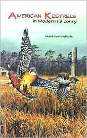 American kestrels in modern falconry