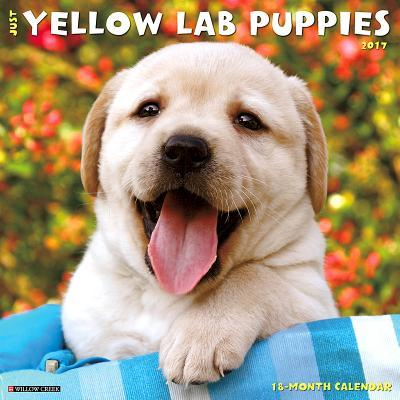 Just Yellow Lab Puppies 2017 Calendar