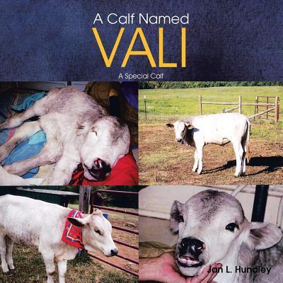 A Calf Named Vali