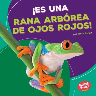 ¡Es una rana arbórea de ojos rojos! / It's a Red-Eyed Tree Frog!