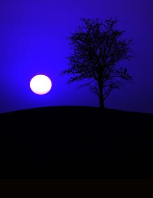 Full Moon and Tree a...